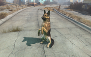 Fo4 Dogmeat's trick