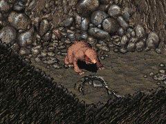 Brain (mole rat)