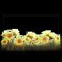 Atx photomode frame florairradiroot l.webp