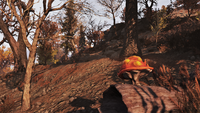 FO76 Flora Forest 4