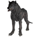 FO76 Feral Wolf.png