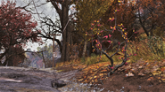 FO76 Flora Forest 1
