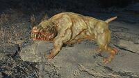 FO4 Mutant hound1