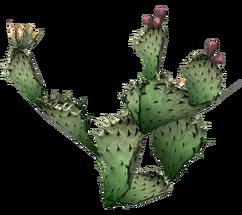 Prickly pear cactus.png