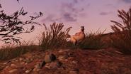 FO76 Creatures chicken 2