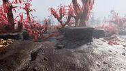 FO76 Sparse sundew grove (3)