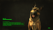 FO4 Loading Screen Dogmeat