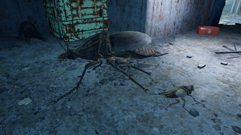 Радтаракан (Fallout 4)