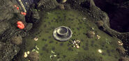 Dionaea Muscipula OWB Loc 1