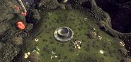FNVOWB Dionaea Muscipula Loc 1