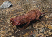Fo4 rabid mole rat.jpg