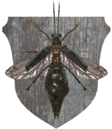FO76 taxidermy firefly-off