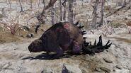 Fo76 beaver
