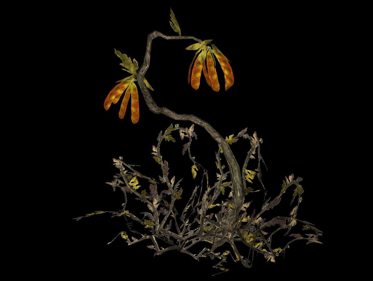 Silt bean plant