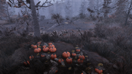 FO76 Halloween fright farm 06