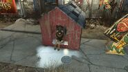 Dogmeat in doghouse