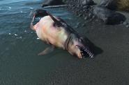 FO4 Whale dude