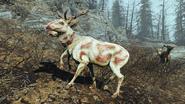 FO4 Белый рад-олень