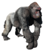 FO4NW Ghoulrilla King.png