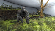 FO4 gorilla is a synt