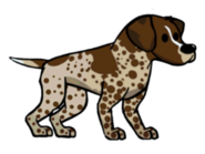 FOS Dog6