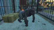 FO4 NW PackGhoulrilla