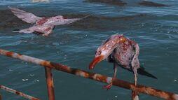 FO4 seagulls.jpg
