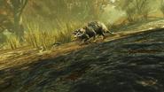 FO76 2121 Possum 2