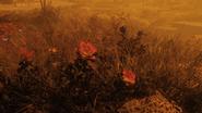 FO76 New flora blast zone 16