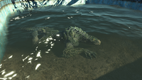 Gatorclaw in water
