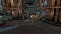 FO76WA Scoot's shack (House Cat)