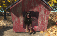 FO4 Dog in the booth