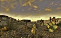FNV Flora Mojave 6