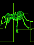 FO2 Ant target