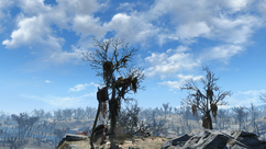 FO4 car tree hill 2.png