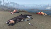 FO4 Sea creatures NStar wreck 1