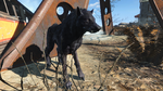 Fo4FH vicious wolf.png