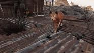 FO76 Kitty in the Ash Heap