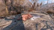Fo4 Brahmin Corpse with Mines.jpg