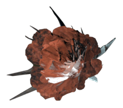 Ash rose.png