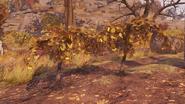 F76 Mutfruit plants