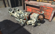 FO4 Bug head back