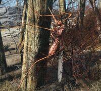 Fo4-bloodbug-tree