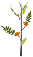 FNV Broc flower plant