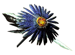 Fo4FH Aster consumable.png