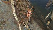 FO4 Bloodbug Hatchling.jpg