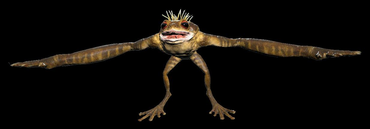 Captured frog
