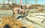 FO4NW Exterior 107