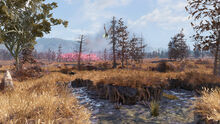 FO76 Cranberry Bog overview (02)