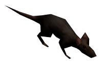 VB rat.png